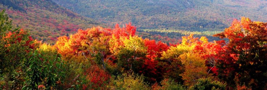 autumn920x310